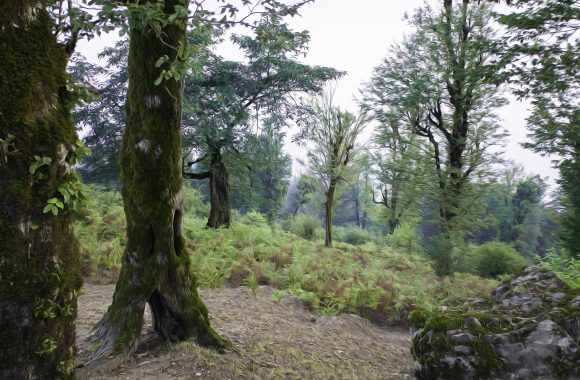 فانتزی جنگل